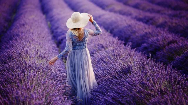 6월부터 8월까지 사랑 받는 꽃, 세계의 라벤더 축제를 찾아서