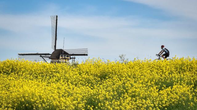De zachte winter in Nederland: dit zijn de gevolgen