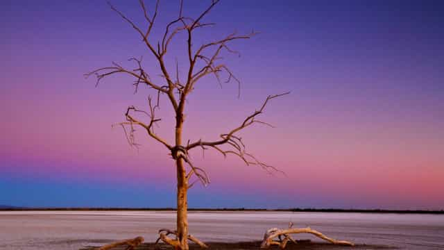 Salton Sea: Do paraíso ao purgatório