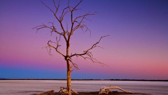 Salton Sea: de paraíso de famosos a desastre ecológico