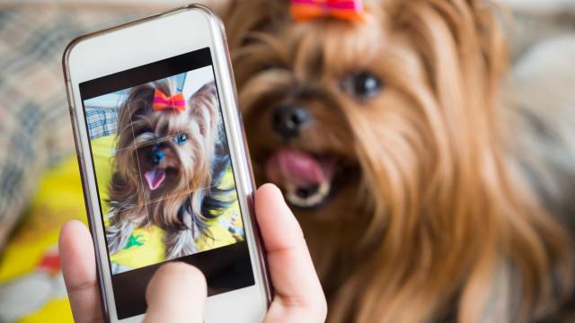 Waarom je je huisdieren niet op social media moet plaatsen
