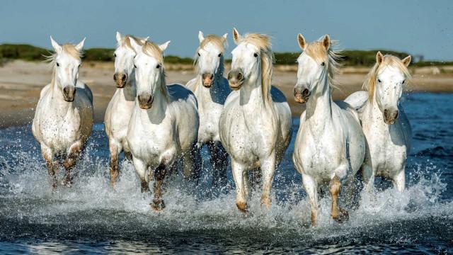 Uljaiden hevosten elämää: työssä, levossa ja leikin tiimellyksessä