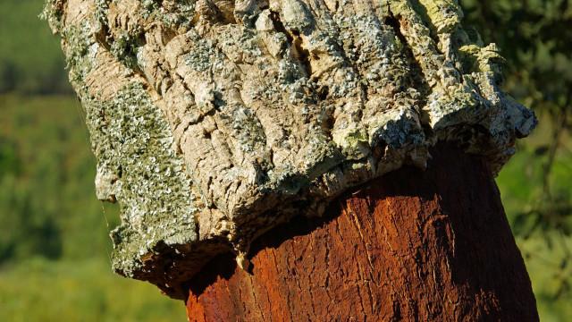 Korkki, hämmästyttävän monipuolinen ja ympäristöystävällinen luonnonmateriaali