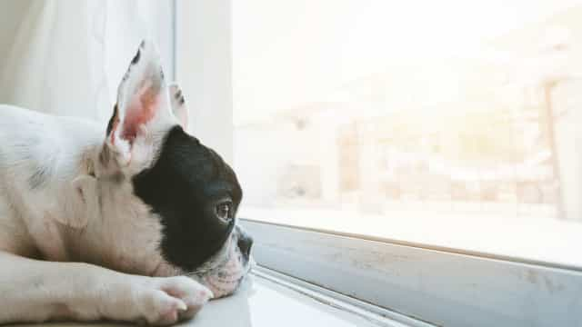 Mist je hond je echt als je weg bent?