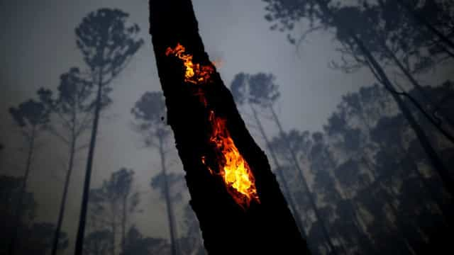 The Amazon: paradise on Earth to blazing inferno