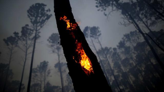 Amazonas brinner!