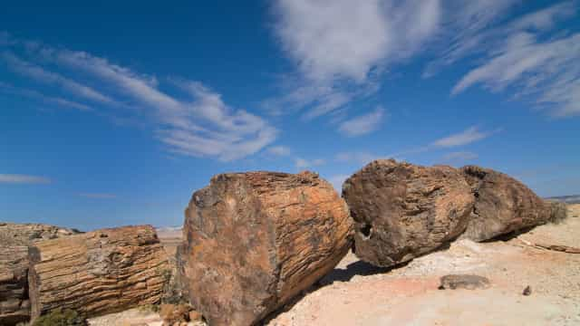 Made in stone! The world's most breathtaking petrified forests