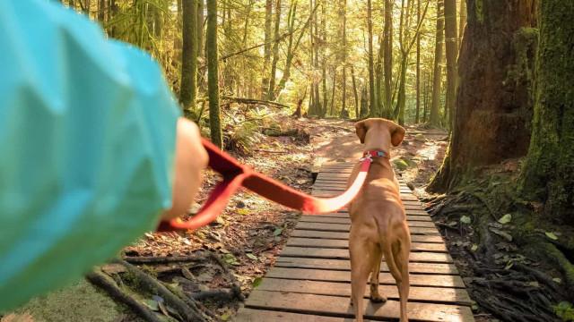 Hur man går ut med sin hund som en hundexpert