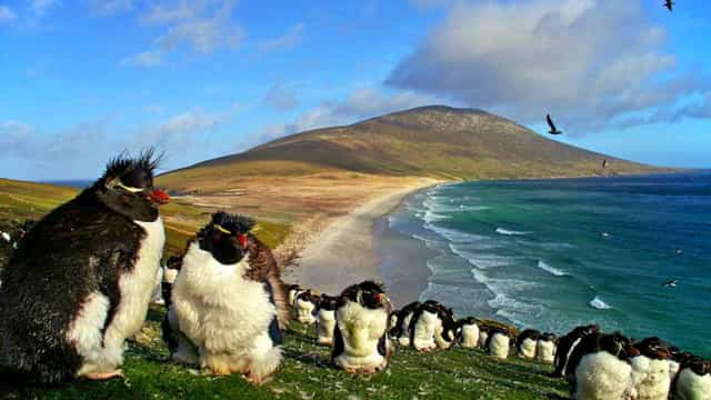 Let's find the Falkland Islands