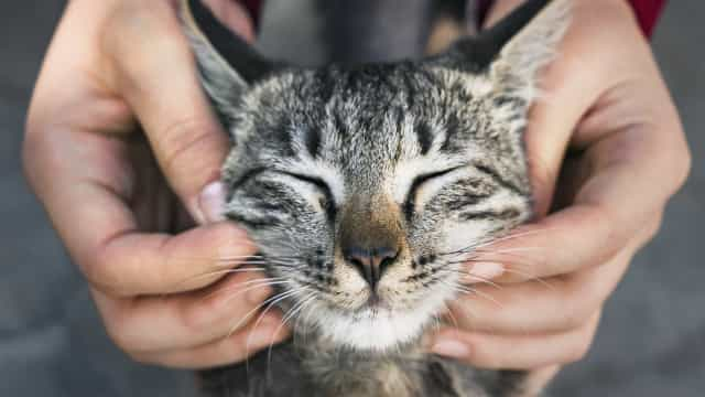 Common myths about cats, debunked