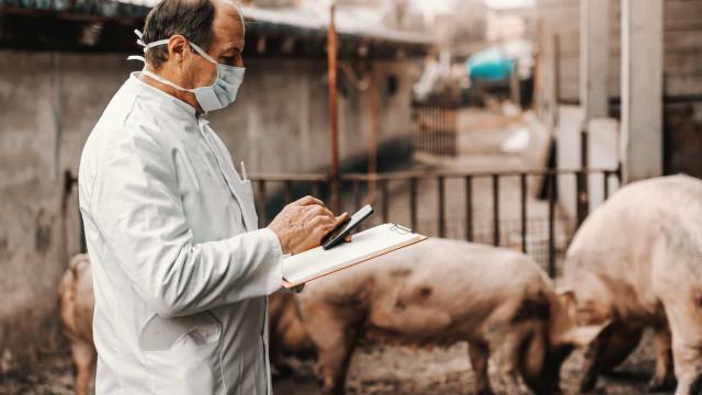 아프리카 돼지열병 및 다른 동물 매개 질병들