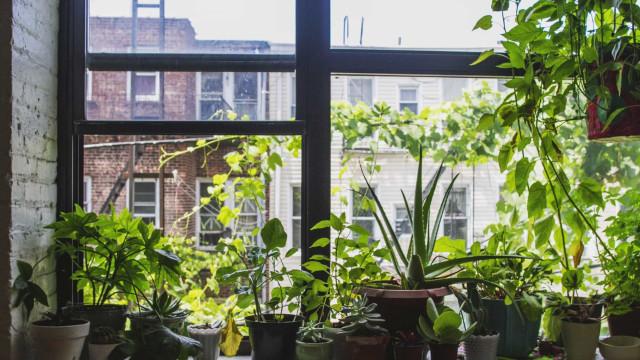 Zo maak je je huisplanten winterklaar