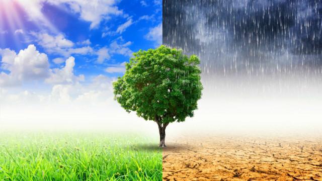 Saiba como poderá ajudar no combate às alterações climáticas