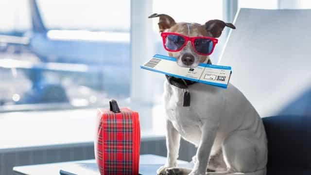 What you need to know before traveling with pets