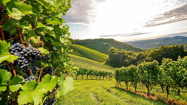 Zo beïnvloedt klimaatverandering de wijn die we drinken