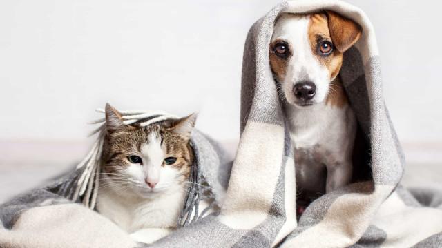Sådan beskytter du dine kæledyr i løbet af vinteren