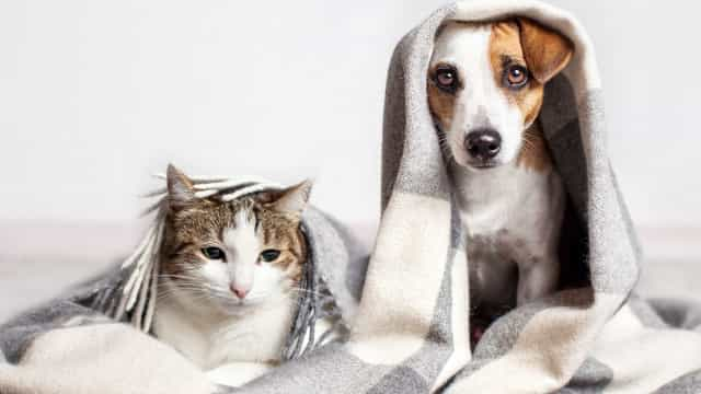 Ta hand om ditt husdjur i vinterkylan