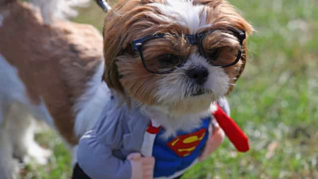 Los mejores disfraces de Halloween para perros