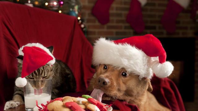 Estos adorables animales ya están listos para la Navidad