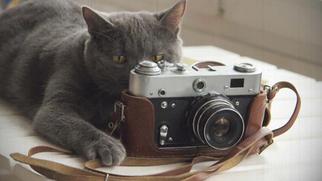 Katteneigenaars maken 7 kattenfoto's per dag