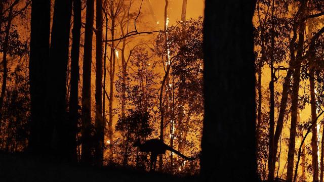 Ces incendies de forêts ravagent notre planète
