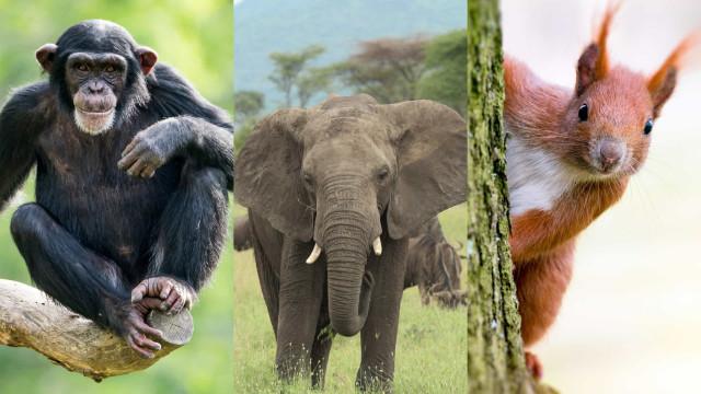 ¿Cuáles son los animales más inteligentes del mundo?
