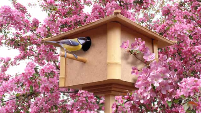 Creative ways to attract wildlife to your garden