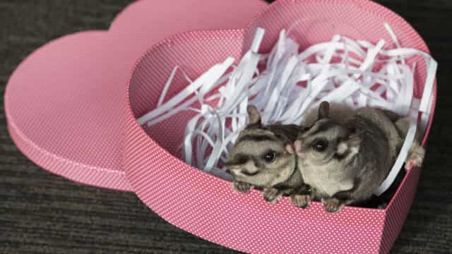 Cute animals celebrating Valentine's Day