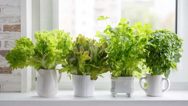Foods you can easily grow indoors