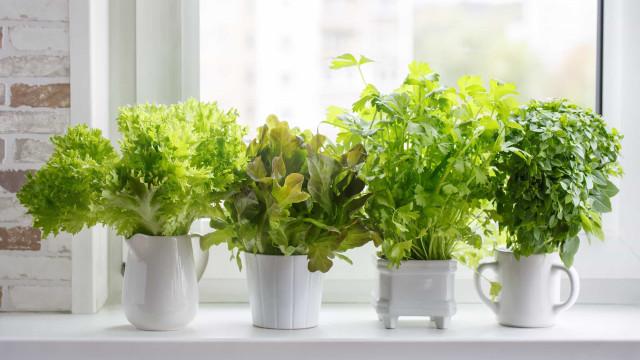 Ruoat, joita voit helposti kasvattaa kotona