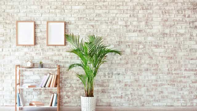 Beautiful indoor plants to grow at home