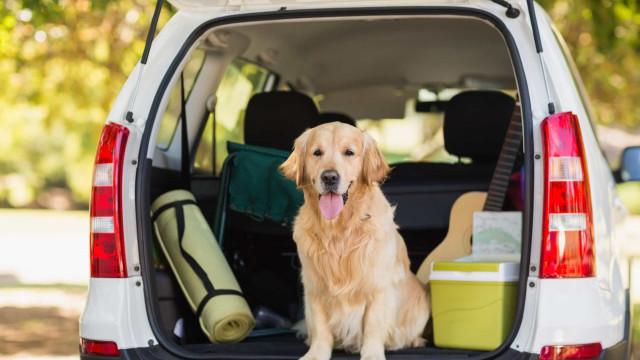 En guide til at tage din hund med på road trip