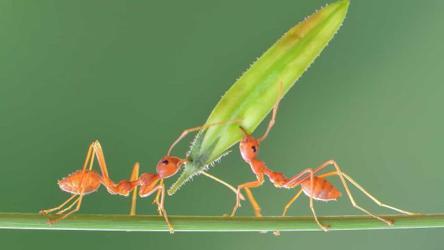 Ce que les fourmis peuvent nous apprendre sur la gestion des épidémies