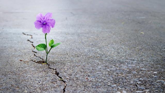 10 boas razões para não perder a esperança