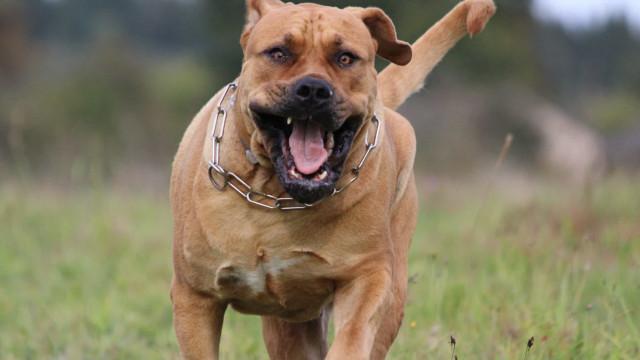 Deze honden zijn verboden in bepaalde landen