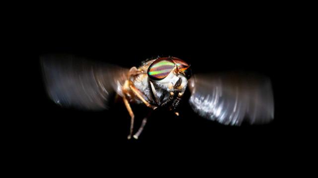Les insectes les plus dangereux pour votre santé