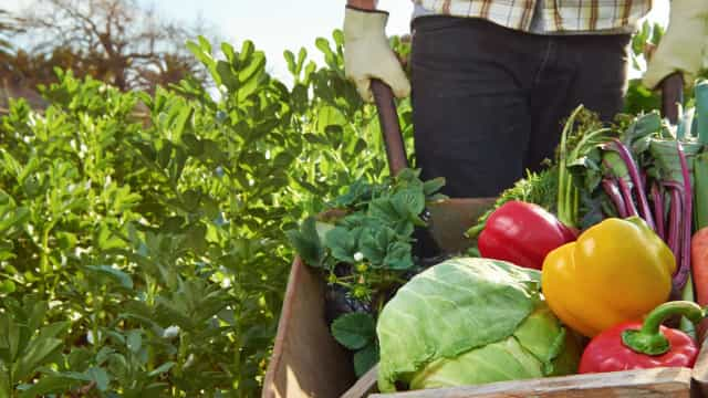 Wat is het effect van corona op de voedselketen?