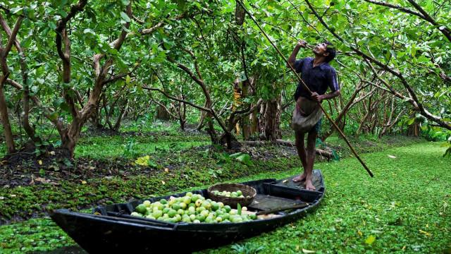 Jardins flottants : La réaction du Bangladesh face au changement climatique