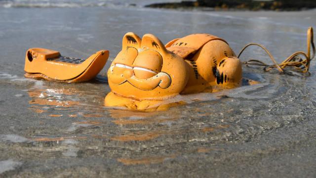 Ces choses étranges se sont échouées sur la plage
