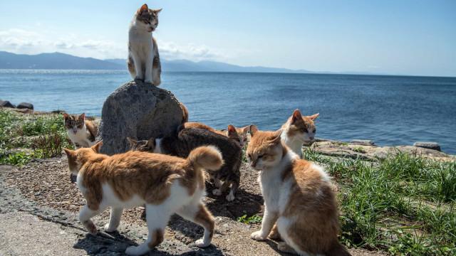 Conhece todos os nomes coletivos de animais?
