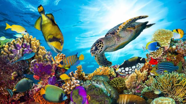 Les Maldives, un paradis sur Terre
