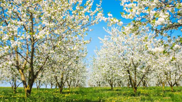 The benefits of the beautiful blossom