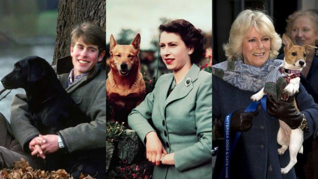 Die süßesten royalen Hunde der Geschichte