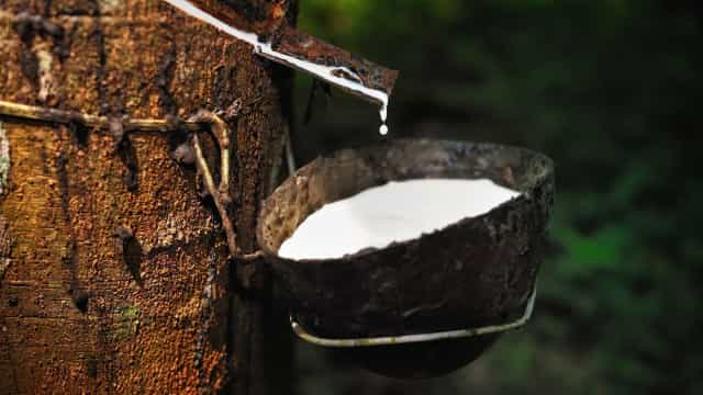 The race to revive natural rubber supplies