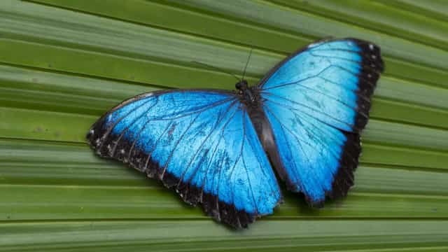 Lovely Lepidoptera: Looking at butterflies and moths