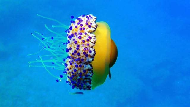 Factos surpreendentes sobre criaturas das profundezas
