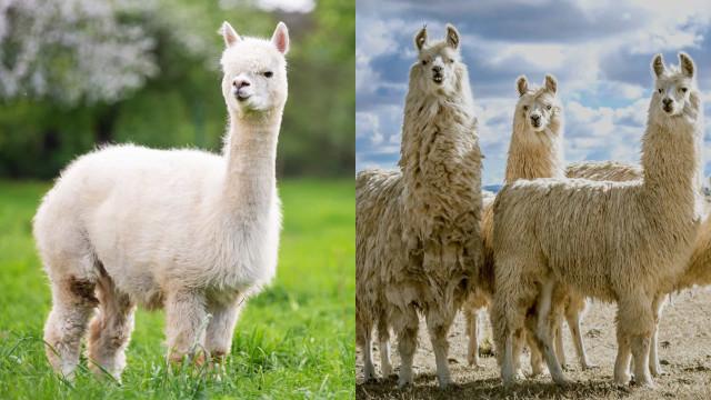 닮은꼴 동물들의 차이점을 알고 있나요?