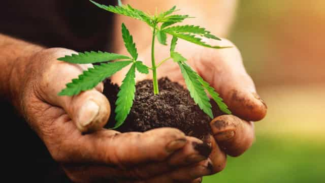 The positive impact of hemp on the planet
