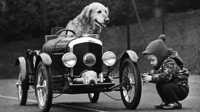 Dogs go cruisin' in their cars