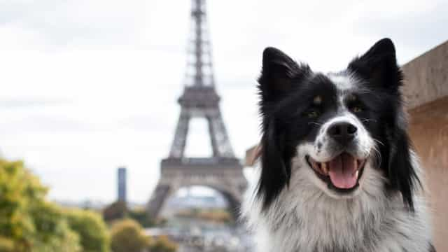 The most dog-friendly cities in the world
